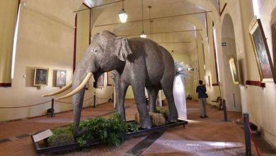 Photo of Quando a Stupinigi la grande attrattiva era l'elefante Fritz