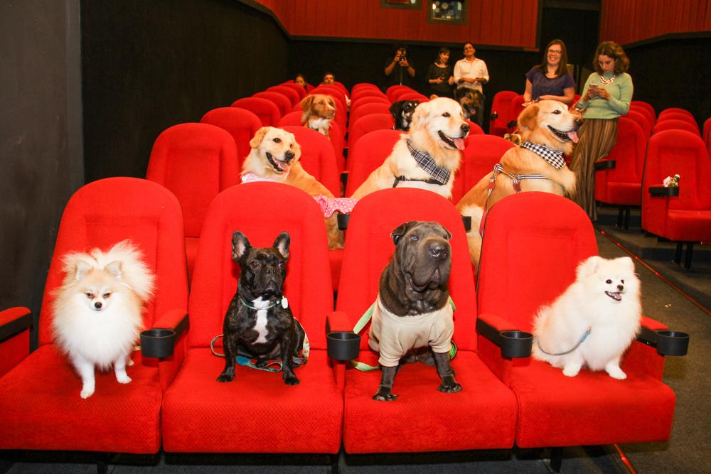 Photo of Il cinema Massimo apre le porte ai cani, purché accompagnati