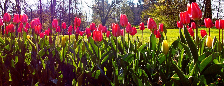 Photo of Dove andare il 25 aprile: alcuni suggerimenti della nostra redazione