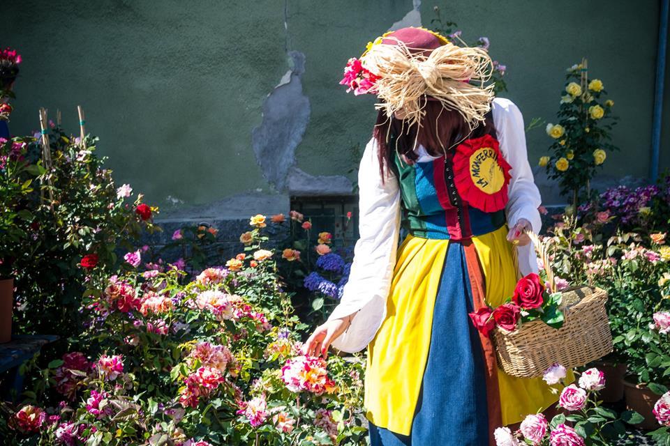 Photo of Anche quest'anno Coniolo si veste di fiori variopinti e profumatissimi