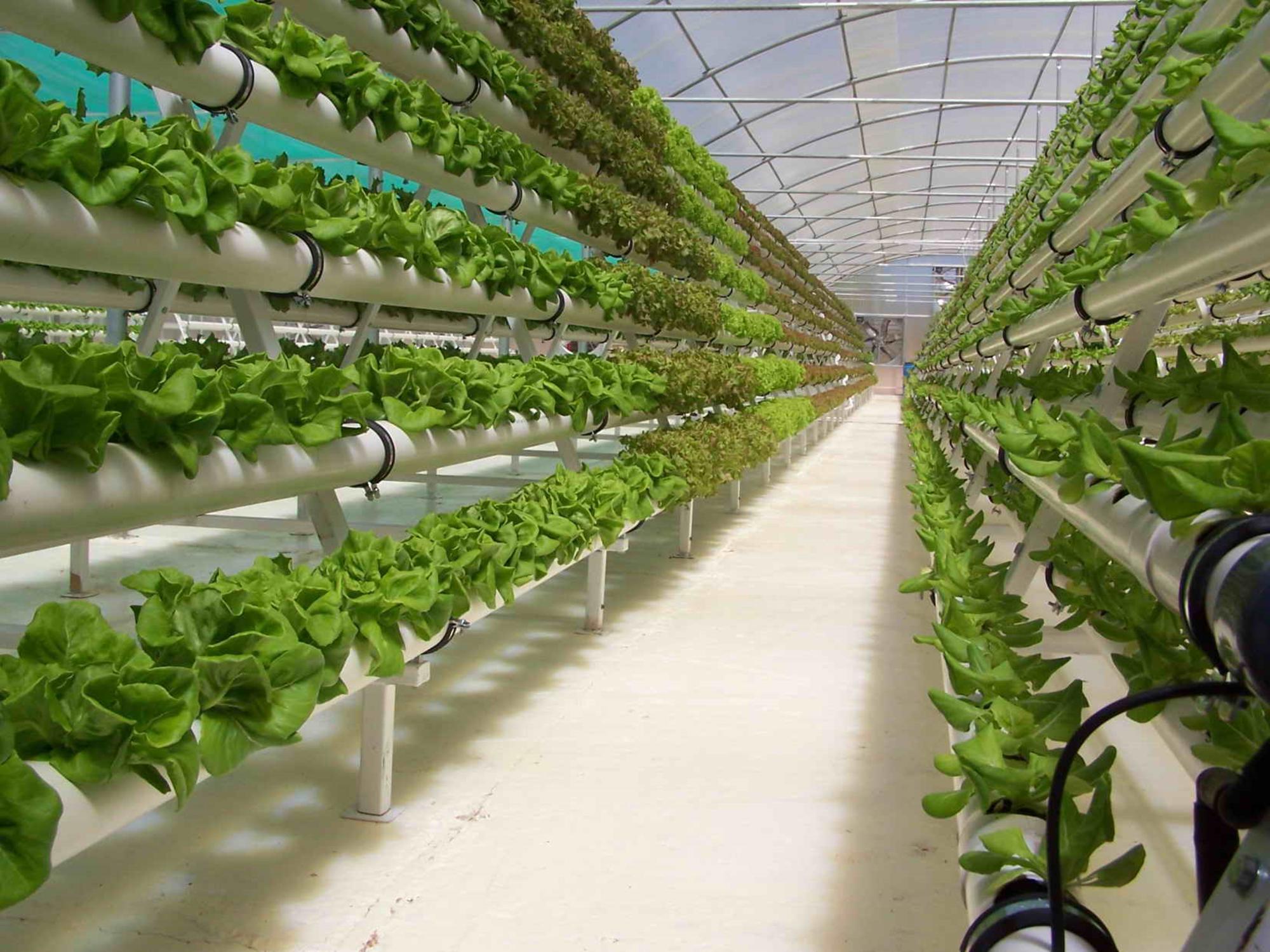 Photo of A Grugliasco arrivano le coltivazioni aeroponiche per produrre cibo sano