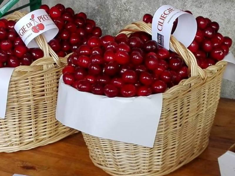 Photo of Il raccolto delle ciliegie di Pecetto compromesso dal maltempo di maggio
