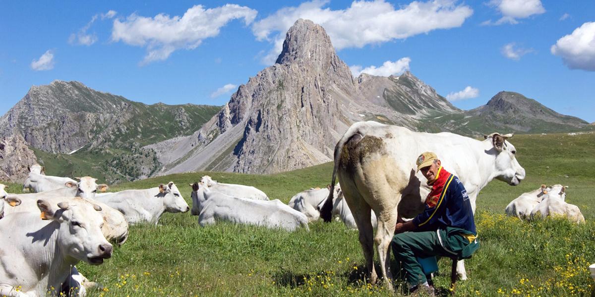 Photo of Tradizioni piemontesi: giugno, tempo di transumanza e di formaggi d'alpeggio