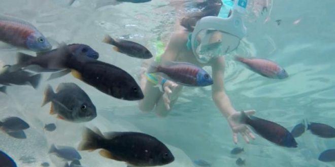 Photo of Allo Zoom Torino: un bagno in piscina assieme ai piranha… per fortuna sono erbivori