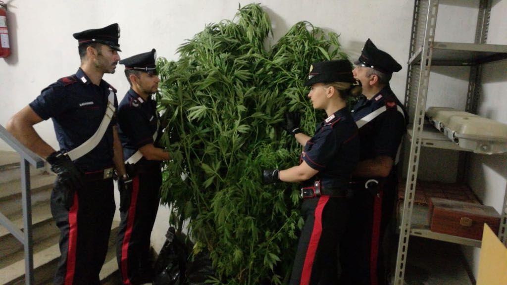Photo of Coltivava marijuana nei boschi del Pinerolese, arrestato un cinquantaseienne