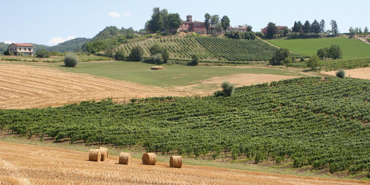 Photo of Nel Piemonte dei nobili Obertenghi, alla scoperta del Timorasso e del Montebore