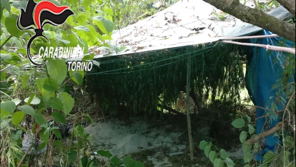 Photo of San Sebastiano da Po, coltivavano marijuana su un isolotto in mezzo a Po