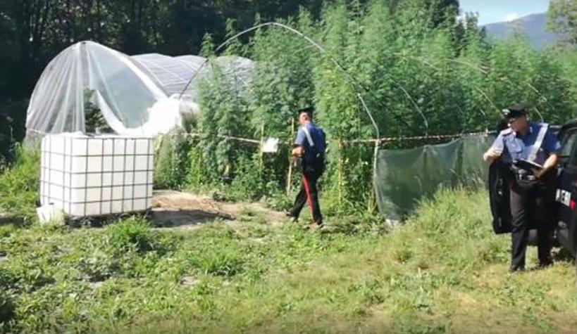 Photo of Due piantagioni di cannabis scoperte dai carabinieri: nei guai 5 giovani ad Almese e Villar Dora