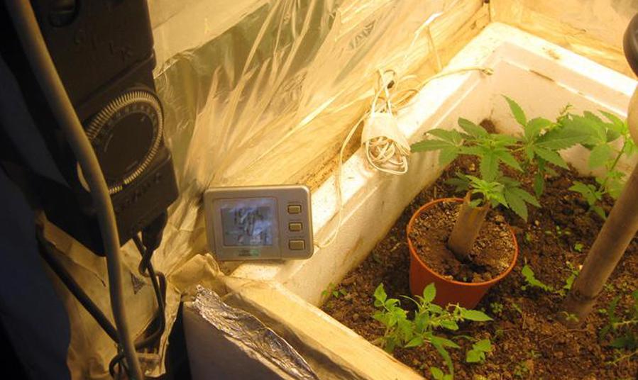 """Photo of Coltivava """"a suon di musica"""" piante di marijuana: arrestato cinquantenne"""