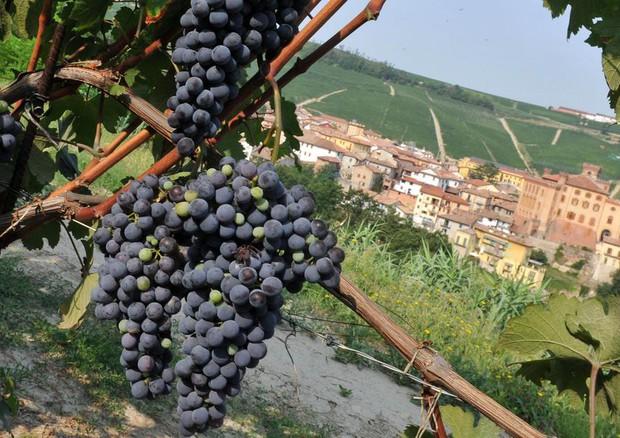 Photo of Un'ottima annata per i vini piemontesi grazie al caldo settembrino