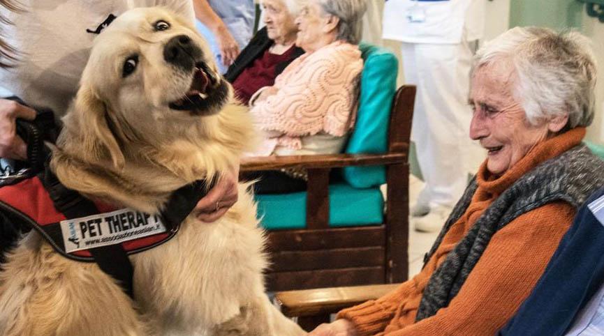 Photo of Pet Therapy, un incontro formativo a Scienze Veterinarie di Torino il 28 settembre