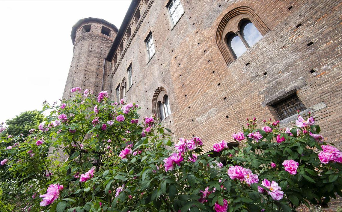 Photo of In giardino a Palazzo Madama per imparare i segreti di bulbi, gemme e potature