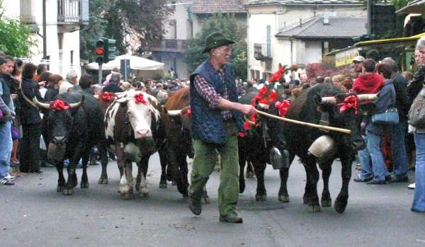 Photo of Desnalpà a Settimo Vittone con le mandrie bovine di ritorno dagli alpeggi estivi