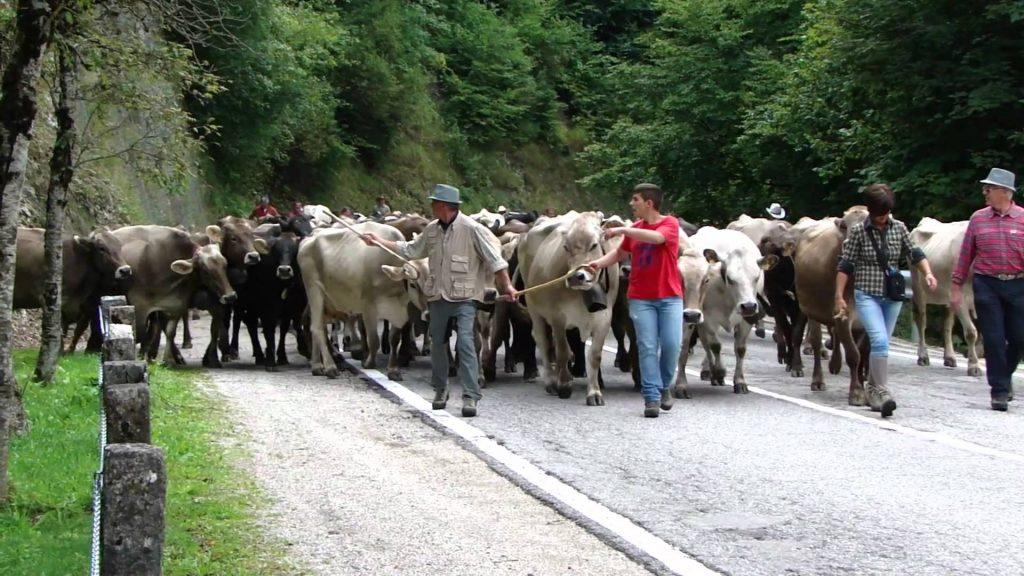 """Photo of """"Caluma el vache"""", appuntamento a Prazzo anche per parlare dei problemi del comparto"""