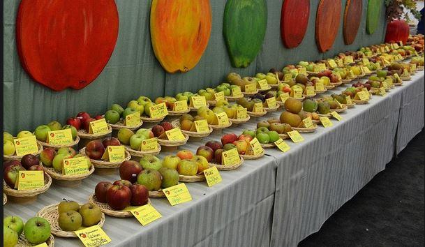 Photo of Fiera delle mele e dei prodotti agricoli nel giorno di San Martino a Caprie