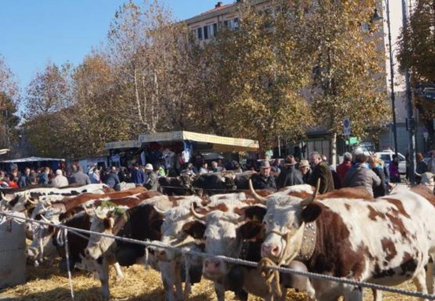 Photo of A Cuorgnè è tempo di Fiera di San Martino: domenica 18 la benedizione degli animali
