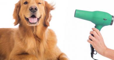 La toelettatura di cani e gatti, cosa c'è da sapere per un manto pulito e ordinato