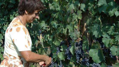 Photo of E' l'anno del Dolcetto, il vino con 12 denominazioni d'origine