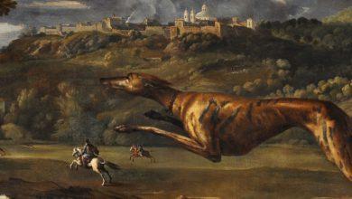 """Photo of """"Cani in posa"""" dall'antichità a oggi in mostra alla Reggia di Venaria"""