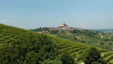 Photo of Nelle terre del Cisterna d'Asti, la Doc ricavata da uve Croatina