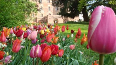 Photo of Annullato Messer Tulipano al castello di Pralormo