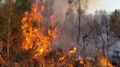 Photo of Tornano a bruciare i boschi della Valsesia: indagano i carabinieri
