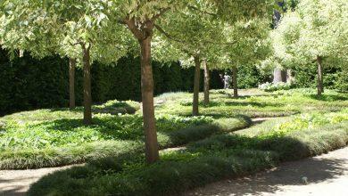 Photo of Riapre il parco di Racconigi, era chiuso da otto mesi