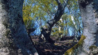 Photo of Piemonte da scoprire: la Riserva naturale di Palanfrè