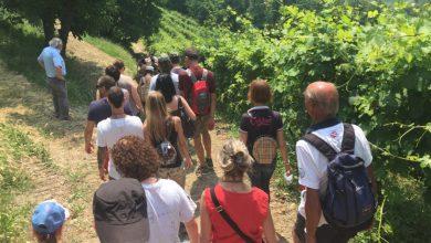 Photo of A Cocconato, una camminata enogastronomica tra le vigne