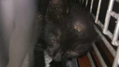 Photo of Liberato dopo due giorni il gatto imprigionato nella metro
