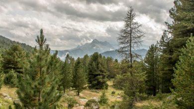 Photo of Lo storico polmone verde della Val Varaita: il bosco dell'Alevé