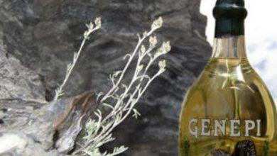 Photo of Genepì, il liquore alpino facile da preparare anche a casa
