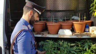 Photo of Stupinigi, piantagione di marijuana scoperta nel parco