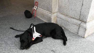 Photo of Ci scrive un'ipovedente: il mio cane guida maltrattato in chiesa