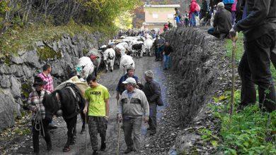 Photo of A Usseglio l'antico rito della Dèsarpa, la festa del rientro delle mandrie dall'alpeggio