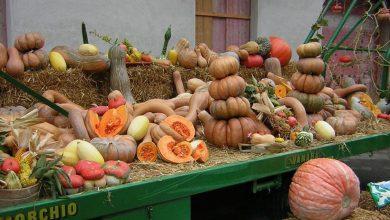Photo of Protagonista indiscussa della cucina autunnale: la zucca