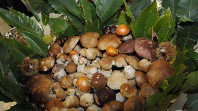 Photo of Giaveno, un mese dedicato alla cultura del fungo