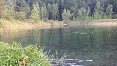 Photo of Un quindicennio di tutela dello stagno di Oulx: le celebrazioni domenica 6