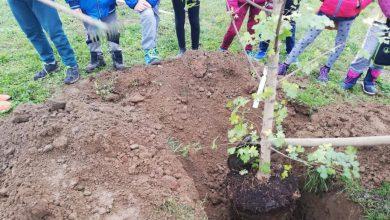 Photo of Piantumati alberi e arbusti dagli studenti di Stupinigi e dintorni