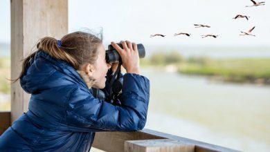 Photo of Birdwatching alla piemontese: i nomi degli uccelli e i proverbi a loro ispirati