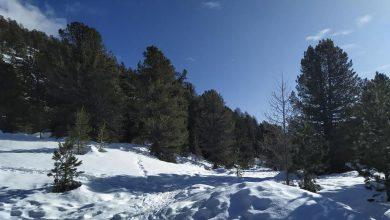 Photo of Il Bosco dell'Alevè d'inverno: un percorso incantato in mezzo alla neve