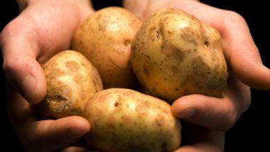 """Photo of Vincenzo Virginio, il """"Parmentier piemontese"""" che diffuse l'uso alimentare della patata"""