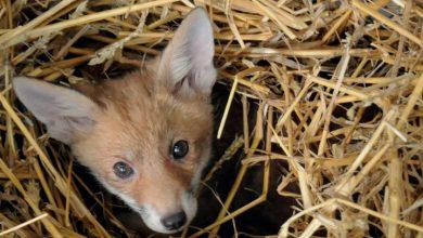 Photo of Un servizio di recupero degli animali selvatici coinvolti in incidenti