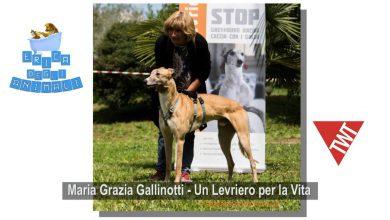 Photo of Erica degli Animali, si parla di Galgos Spagnoli su Torino Web Tv