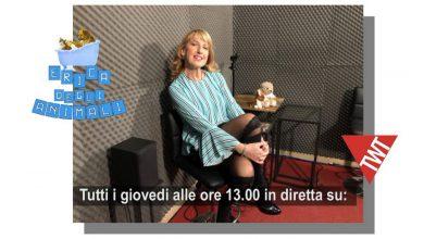 Photo of Quando il cane è un atleta: se ne parla a Torino Web Tv