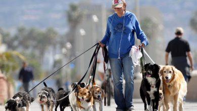 Photo of Nei giorni di emergenza, Sauze d'Oulx attiva il servizio di dog sitter