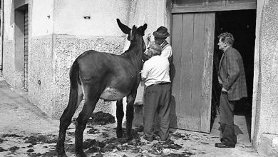 Photo of Aso e borich: modi di dire e curiosi proverbi piemontesi su asini e somari