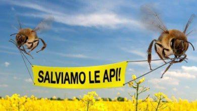 Photo of Tutela delle api con un corretto utilizzo dei fitosanitari: le indicazioni della Regione