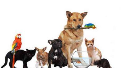 Photo of Rispettare gli animali, ce lo insegna un'associazione torinese