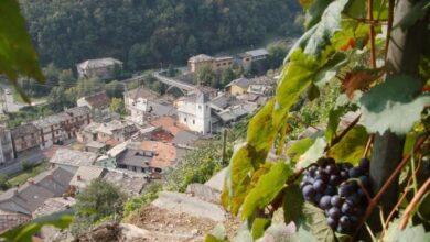 """Photo of Il """"Ciabot"""" di Pomaretto diventa un punto di degustazione del vino Ramìe"""